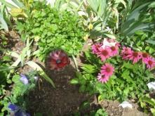 Fleur décorative dans le jardin d'une cliente à Souvigné près de Tours