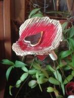 Fleur à planter dans un pot ou en pleine terre